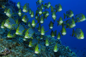 Maldives are one of Divers Market Adventure Travel's favorite locations